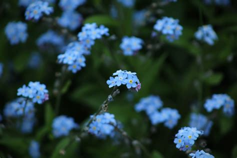 Blue Flowers Pictures [HQ] | Download Free Images on Unsplash