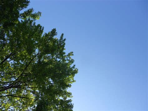 Free Images : tree, nature, branch, cloud, sunlight, leaf